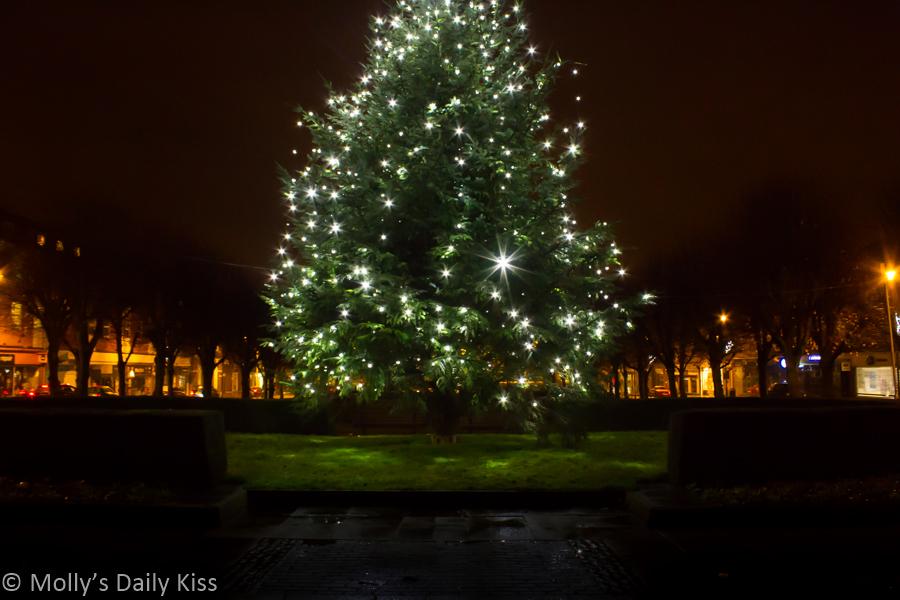 Christmas Tree in Welwyn Garden City