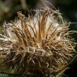 Seed head macro shot