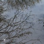 Trees reflected in a puddle