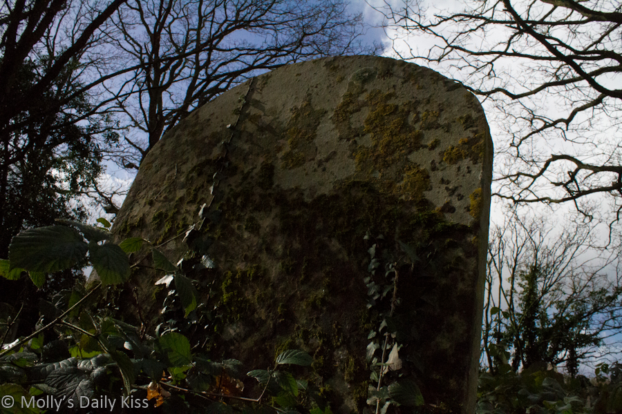 Grave stone wrapped in ivy