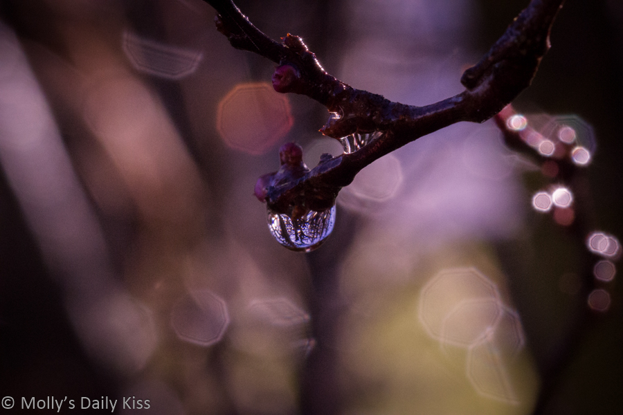 Reflection in Droplet of water on twig
