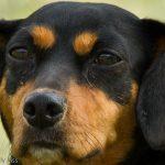 Close up macro of dog face