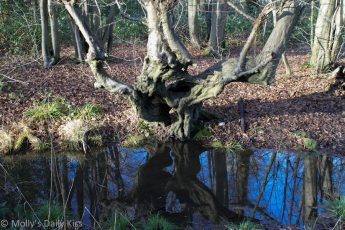 Blue sky reflected in pond water