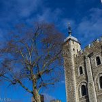Blue sky and winter tree Tower of London