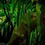 Lizard camoflagued london zoo