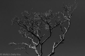 Tree in black and white with sunlight