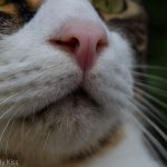 Close up macro of cat whiskerss