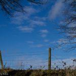Blue sky through winter trees