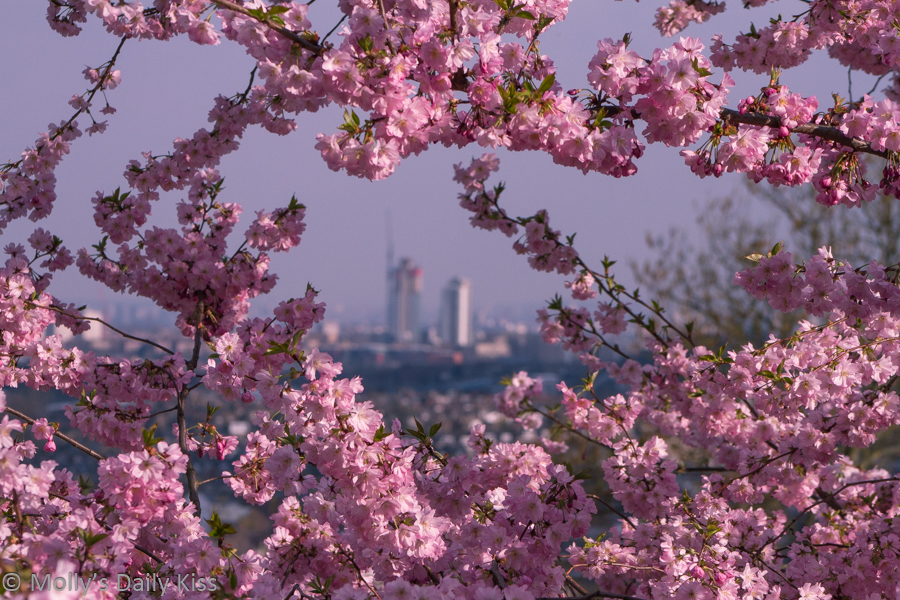 Spring blossom overlooking London