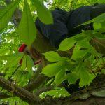 Girl climbing in tree