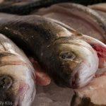 Fish at Hatfield farmers market