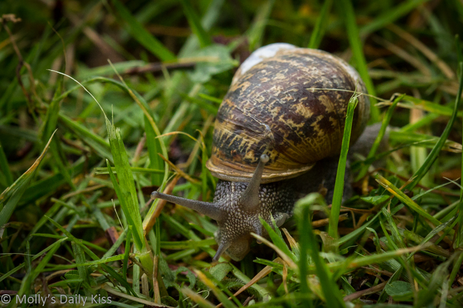 macro shot of a snail in the grass