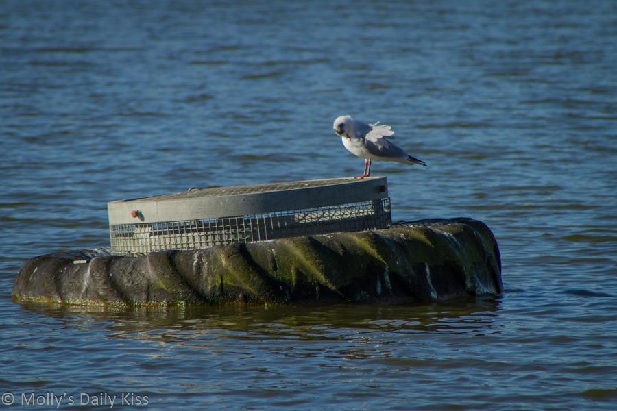 Single bird on tyre in lake