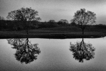 Black and white of pond reflection Mill Green