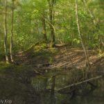 Woodland fairy land
