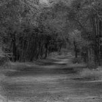 Black and White of woodland path summer