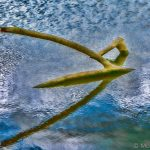Driftwood reflected in water