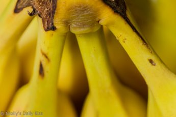 Macro shot of a bunch of bananas