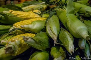 Corn on the cob Reading Terminal Market