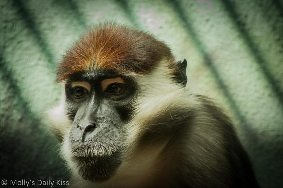 Monkey in Philadelphia zoo