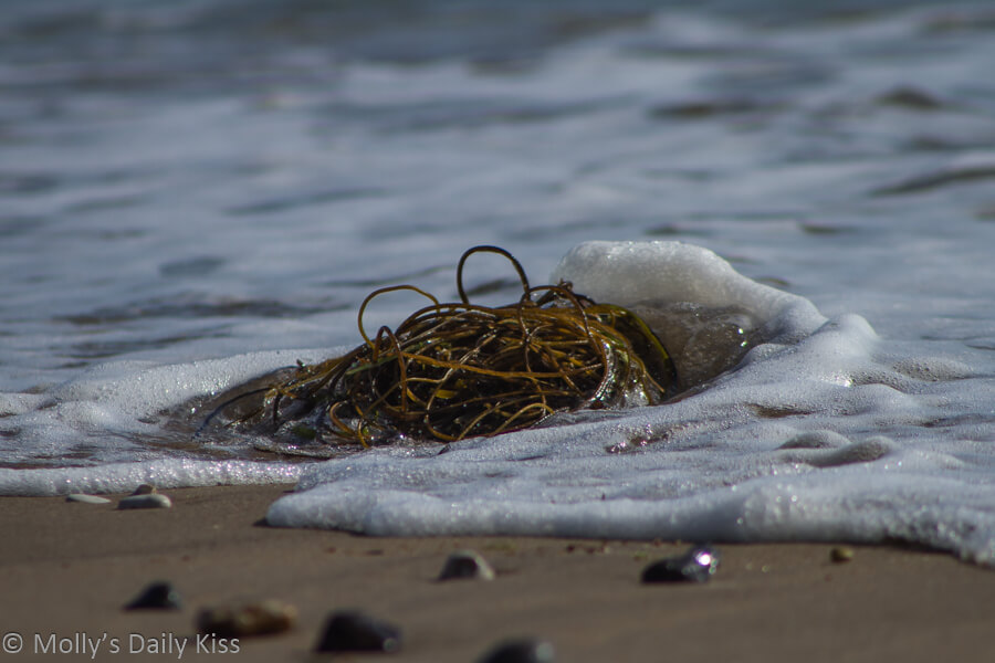 Wave on the shore lapping round seaweed