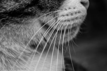 Cat Whiskers close up in black and white