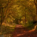 Autumn pathway through the woods