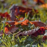 Fallen autumn leaves on the grass
