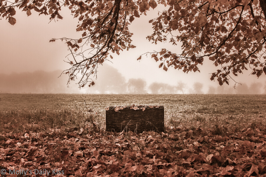Morning fog through autumn leaves