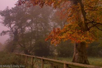 Red leaves on trees in autumn mist