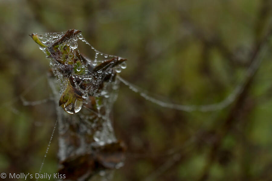 dew drops on autumn leaf and spider web