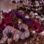 Christmas Roses with Christmas tree