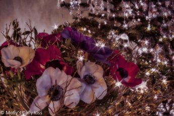 Christmas Roses with Christmas tree
