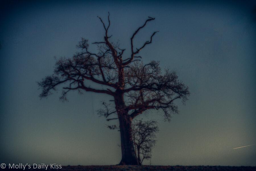 lone winter tree in evening sky