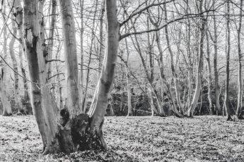 White woodland scene