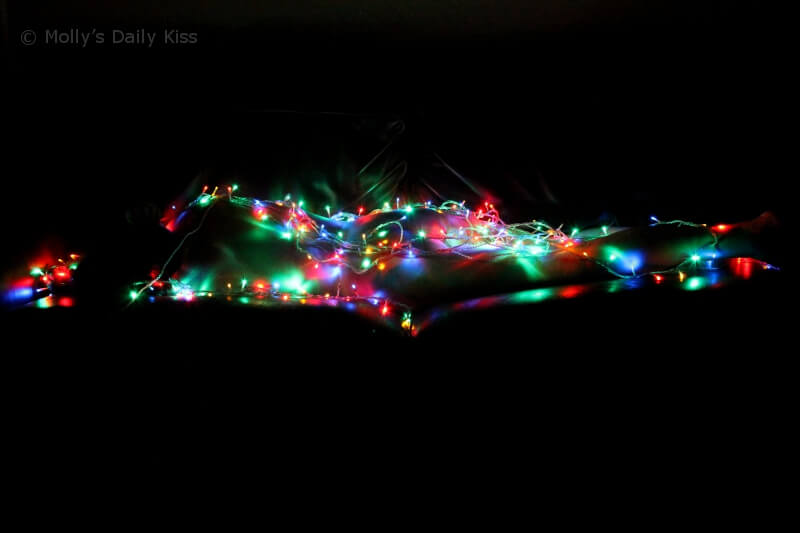 Molly wrapped up in Christmas lights
