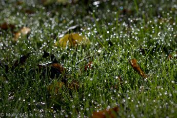 Early morning light over dew on grass
