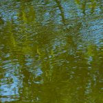 Relection of green leaves in water