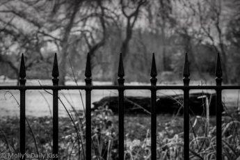 Black metal fence around park