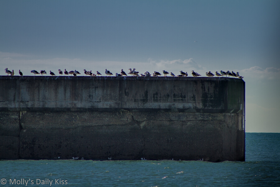 Seagulls in a line on Brighton Breakwater