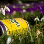 Litter in the crocus' Hatfield, a bug bear