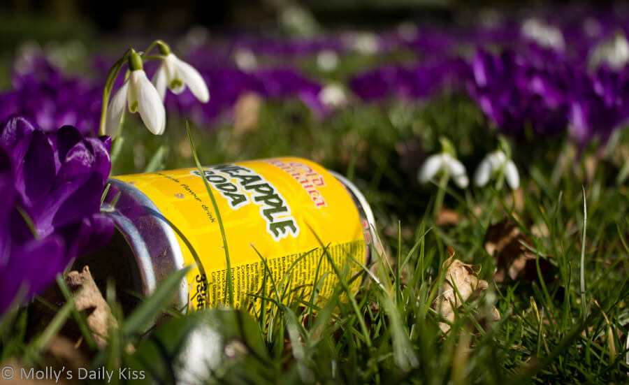 Litter in the crocus' Hatfield, a bug bear