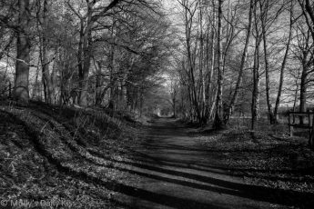 Black and white of wooded path spring