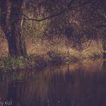 Stream woods reflected in water with spring March sunlight