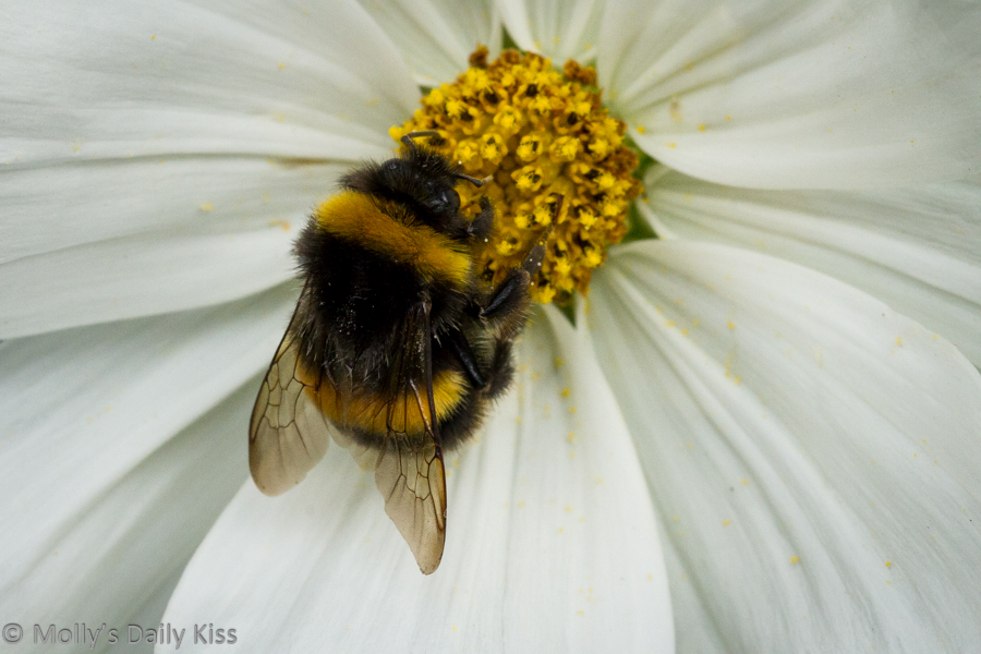 White flower with bumblebee creatures on it