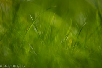 Macro shot with bokeh through the greener grass