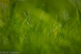 Macro shot with bokeh through the greener grass