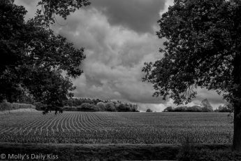 crop lines in earth black and white