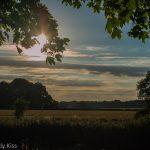 hint of Evening light through trees