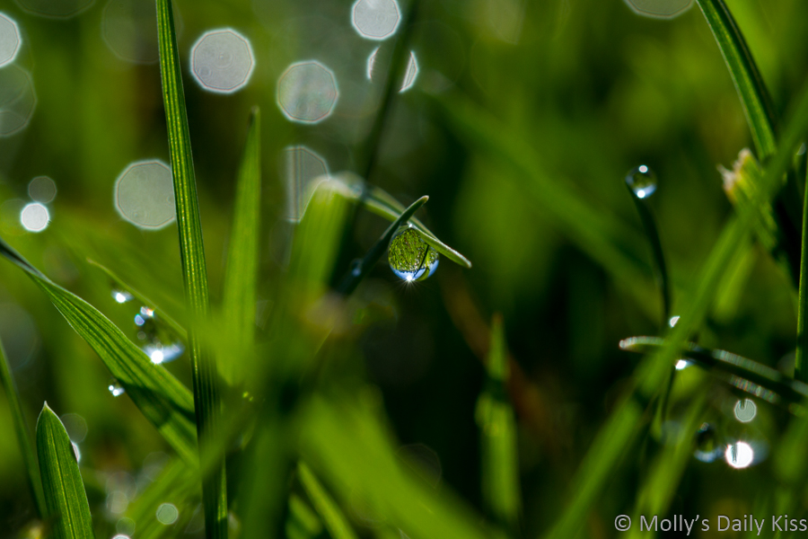 Dew drop reflection sky in green grass beneath your feet